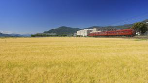 小麦畑とテクノさかき工業団地としなの鉄道のろくもんの写真素材 [FYI04875514]