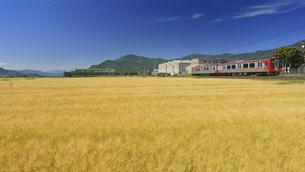 小麦畑とテクノさかき工業団地としなの鉄道のSR1の写真素材 [FYI04875515]