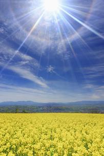 滋野甲の菜の花畑と美ヶ原などの山並みと22度ハロの写真素材 [FYI04875533]