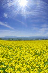 滋野甲の菜の花畑と美ヶ原などの山並みと22度ハロの写真素材 [FYI04875535]