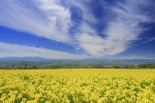 滋野甲の菜の花畑とすじ雲と八ヶ岳と美ヶ原と北アルプス遠望の写真素材 [FYI04875538]