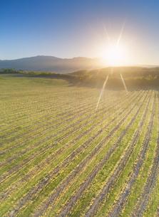 春の椀子ヴィンヤードと浅間山から昇る朝日の写真素材 [FYI04875670]