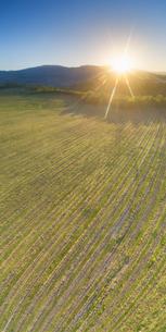 春の椀子ヴィンヤードと浅間山から昇る朝日の写真素材 [FYI04875671]