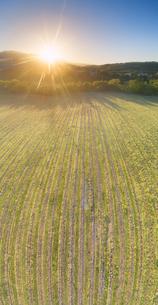 春の椀子ヴィンヤードと浅間山から昇る朝日の写真素材 [FYI04875672]