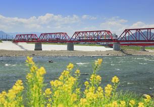 赤い鉄橋を走る別所線の自然と友だち号と菜の花咲く千曲川の写真素材 [FYI04875675]