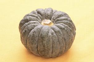 小菊かぼちゃの写真素材 [FYI04875806]