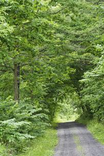 緑の森を抜ける砂利道の写真素材 [FYI04876445]