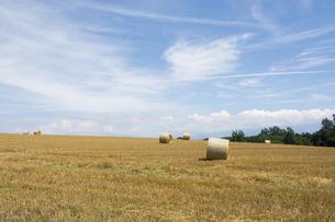 収穫が終わったムギ畑と麦稈ロールの写真素材 [FYI04876447]