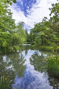 森のリフレクション~札幌・中島公園~の写真素材 [FYI04876488]
