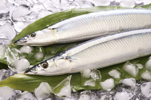 秋刀魚の写真素材 [FYI04876597]