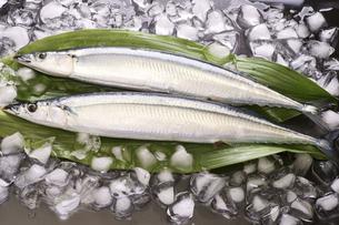 秋刀魚の写真素材 [FYI04876598]