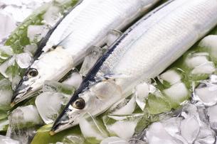 秋刀魚の写真素材 [FYI04876599]