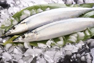 秋刀魚の写真素材 [FYI04876600]