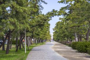 草加松原松並木の写真素材 [FYI04877134]