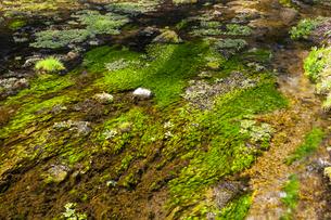 姫川源流の流れの写真素材 [FYI04877193]