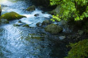 初夏の菊池渓谷の写真素材 [FYI04877287]