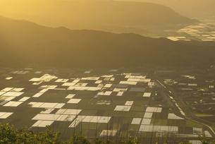 かぶと岩展望所からみえる阿蘇の水田の写真素材 [FYI04877482]