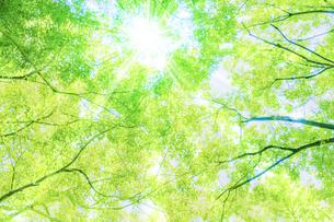 新緑と木漏れ日の写真素材 [FYI04877619]