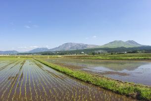 阿蘇のカルデラに広がる田んぼと阿蘇五岳の写真素材 [FYI04877704]