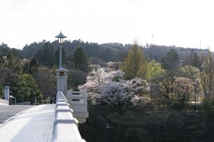 大橋から望む桜咲く青葉城隅櫓方面の写真素材 [FYI04877756]