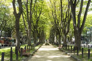仙台市の街並み 新緑の定禅寺通の写真素材 [FYI04877781]