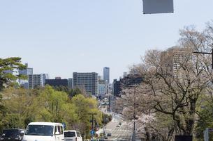 仙台市の街並み 川内の桜咲く道とビル街遠望の写真素材 [FYI04877799]