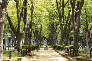 新緑の定禅寺通り 水浴の女像の写真素材 [FYI04877807]