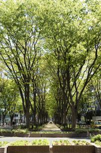 仙台市の街並み 新緑の定禅寺通の写真素材 [FYI04877809]