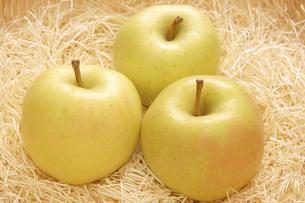 トキりんごの写真素材 [FYI04878038]