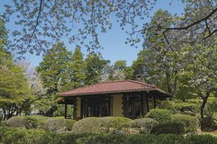 旧渋沢庭園 桜と新緑の国指定重要文化財の晩香盧の写真素材 [FYI04878494]