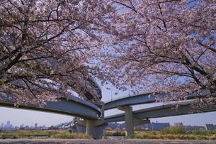 首都高速道路中央環状線ジャンクションと桜の写真素材 [FYI04878505]