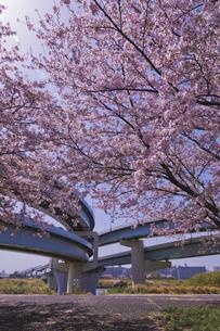 首都高速道路中央環状線ジャンクションと桜の写真素材 [FYI04878506]