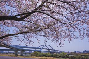 首都高速道路中央環状線五色桜大橋と桜の写真素材 [FYI04878513]