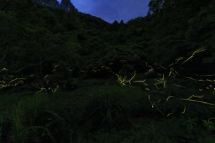 蛍の舞の写真素材 [FYI04878670]