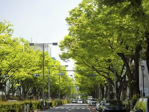 新緑の表参道の写真素材 [FYI04878941]