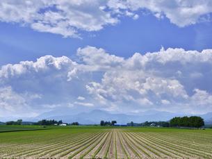 青空と畑の写真素材 [FYI04879121]