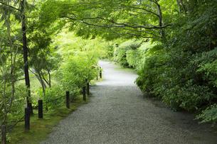 円成寺新緑の小道の写真素材 [FYI04879247]