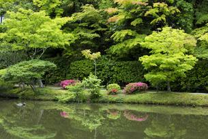 初夏の庭園の写真素材 [FYI04879249]