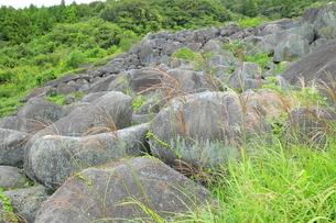 天然記念物の万倉の大岩郷とススキの写真素材 [FYI04879421]
