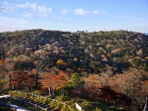 秋の大台ケ原の写真素材 [FYI04879821]