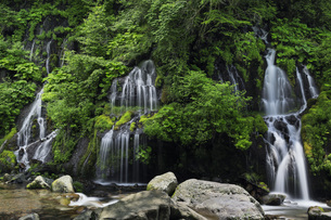 夏の吐竜の滝 山梨県の写真素材 [FYI04879921]