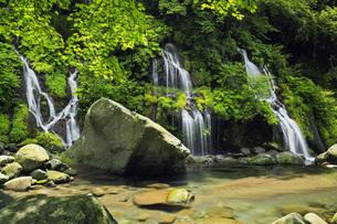 夏の吐竜の滝 山梨県の写真素材 [FYI04879922]