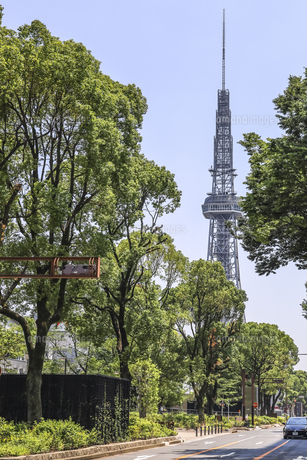 新緑の並木越しに見る中部電力MIRAI TOWERの写真素材 [FYI04880363]