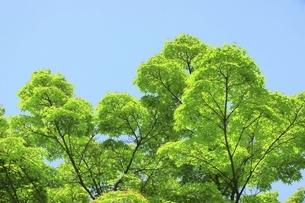青空と新緑の写真素材 [FYI04880376]