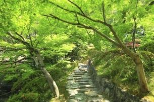 和歌山城 西ノ丸庭園(紅葉渓庭園)の写真素材 [FYI04880427]