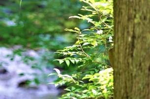 木漏れ日と清流。の写真素材 [FYI04880574]
