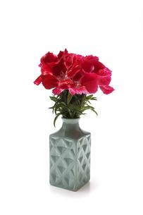 花瓶に活けたイロマツヨイグサの写真素材 [FYI04880626]
