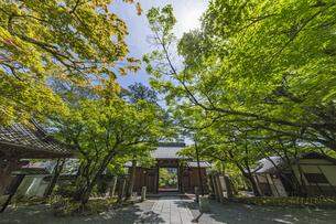 伊豆修禅寺 境内より山門を通して虎渓橋側を臨むの写真素材 [FYI04880725]