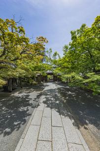 伊豆修禅寺 境内より山門を通して虎渓橋側を臨むの写真素材 [FYI04880733]