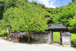 神奈川県 三ツ池公園のコリア庭園の写真素材 [FYI04880783]